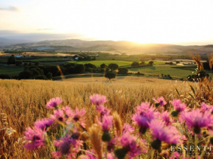 Essentia dimora rurale